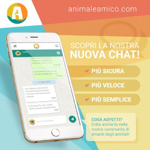 AnimaleAmico.com | Nuova Chat 2019